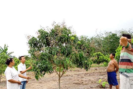 Wow! Agrowisata Klengkeng Akan Hadir di Kota Tengah