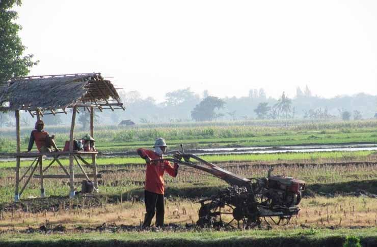 petani-mengemudi-tractor.jpg