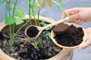 Jangan dibuang, ini 3 manfaat Ampas Kopi untuk tanaman Anda