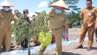 Dukung Program Inovasi Desa, Bupati Sukiman Tanam Semangka, Durian Unggulan di Pasir Indah